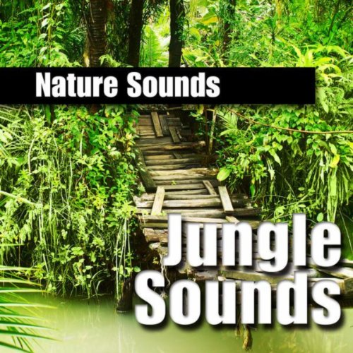 rainforest background nature sound by nature sounds on amazon music