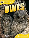 Owls, Sally Morgan and Teacher Created Resources Staff, 1420681117