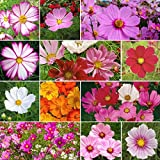 Crazy For Cosmos - Cosmos Flower Seed Mix - 5 Pounds, Bulk, Mixed