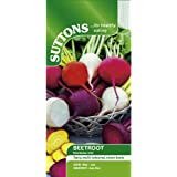 Suttons - Beetroot Seeds - Rainbow Mix (Pack of 250)