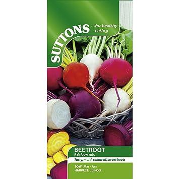 Suttons Seeds 151822 - Semillas para verduras (remolacha)