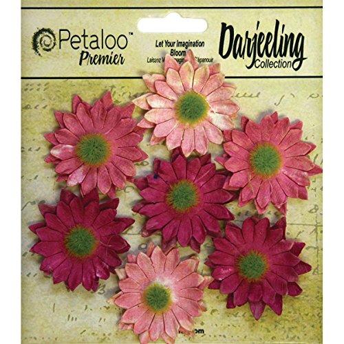(Petaloo Darjeeling Daisy Mini Pink)