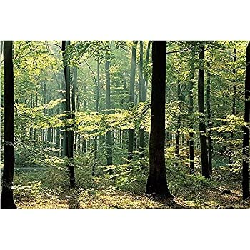 Enchanted Forest Huge Wall Mural 12 Feet 6 Inch Wide X 9 High Covers An