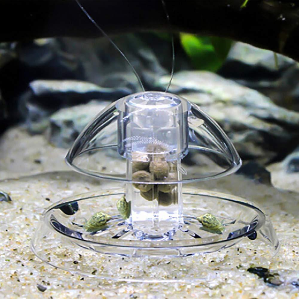 Cinhent Aquarium® - Acuario de Caracol Transparente para Acuario, pecera, planario, Madera de Haya: Amazon.es: Productos para mascotas