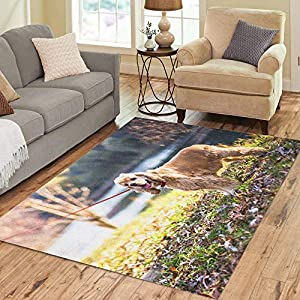 Semtomn Area Rug 3' X 5' Adult American Cocker Spaniel Standing Near Lake Animal Attractive Home Decor Collection Floor Rugs Carpet for Living Room Bedroom Dining Room 9