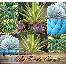 20 AGAVE SPECIES Seeds Mix - Excellent House Plants cactus cacti succulent 4 Greenhouse home OUTDOOR Too