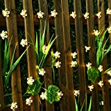 Led flower fairy lights,22ft 50 Led Blossom Solar Fairy Lights Solar Flower String Lights for Outdoor,Garden, Patio(Warm White)