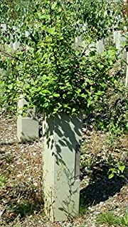 50 X Spiral Tree Guards Shelter Canes Rabbit Hedge Saplings Fence 45cm x 50mm