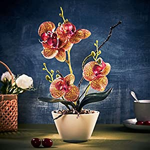 LOUHO Artificial Orchid Phalaenopsis Arrangement Flower Bonsai with Ceramic Vase for Room Table Decor 31cm in Height 2