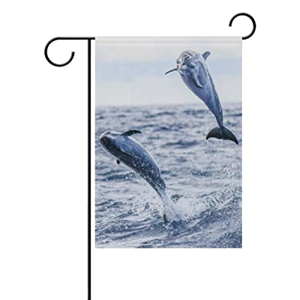 Amazon com : Top Carpenter Spotted Dolphins Double-Sided