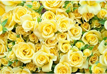 amazon com laeacco 10x8ft graceful yellow rose flower wall vinyl photography backdrop wedding photo background bridal shower banner bride portraits shoot props house decoration wallpaper greeting card camera photo laeacco 10x8ft graceful yellow rose flower wall vinyl photography backdrop wedding photo background bridal shower banner bride portraits shoot props