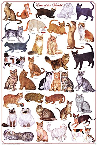 Laminated Cats of the World Educational Science Chart Poster Laminated