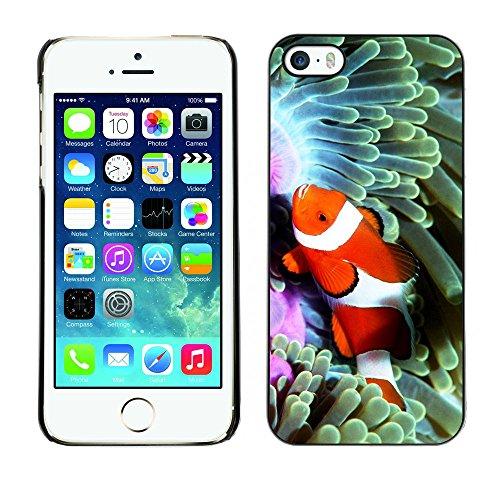 Omega Case PC Polycarbonate Cas Coque Drapeau - Apple iPhone 5 / 5S ( Cool Clown Fish In Coral )
