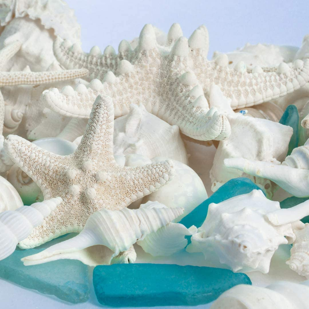 1 Pack Real Mixed Beach Seashells with Real Starfish /& Aqua Blue Sea Glass White Decorative Seashell D/écor /& Blue Seaglass Pieces Nautical Crush Trading Sea Shells Seashell Wedding