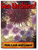 Sea Urchins! Learn About Sea Urchins and Enjoy Colorful Pictures - Look and Learn! (50+ Photos of Sea Urchins)