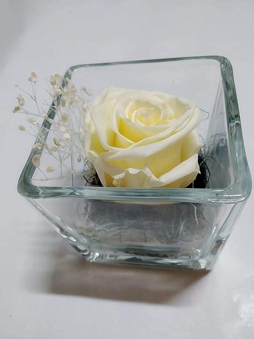 Rosa Blanca preservada. Gratis tu ENVÍO. Rosa eterna Blanca. Rosa ...