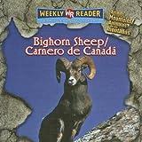 Bighorn Sheep (Carnero de Canadá), JoAnn Early Macken and JoAnn Early Macken, 0836864468
