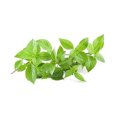 940mg Certified Organic & Heirloom Lemon Basil ~500+ Seed Pack Non-GMO Thai Herb : Garden & Outdoor