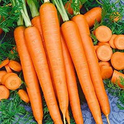 Tendersweet Carrot Seeds - Non-GMO, Heirloom Vegetable Garden Seeds - Gardening by Mountain Valley Seeds