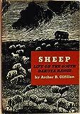 img - for SHEEP - LIFE ON THE SOUTH DAKOTA RANGE book / textbook / text book