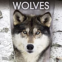 Wolf Calendar - Wolves Calendar - Calendars 2016 - 2017 Wall Calendars - Animal Calendar - Wolves 16 Month Wall Calendar by Avonside