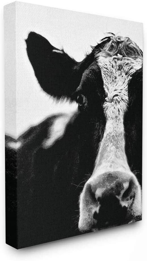The Stupell Home Decor Collection Cow Black and White Close up Stretched Canvas Wall Art, Multicolor