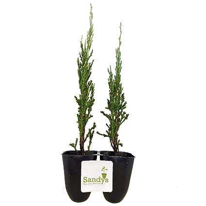 Mature plants fast photos 943