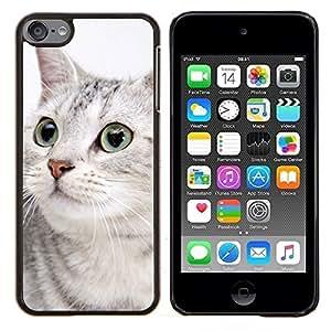 Gato egipcio de Mau Shorthair gris Sokoke- Metal de aluminio y de plástico duro Caja del teléfono - Negro - iPod Touch 6