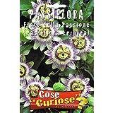 Vivai Le Georgiche Passiflora o Fiore Della Passione (Semente)