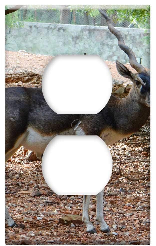 3dRose lsp/_60321/_6 Acadia National Park Eagle Lake 2 Plug Outlet Cover