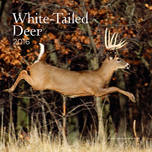 Turner White Tailed Deer 2016 Wall Calendar (8940059)