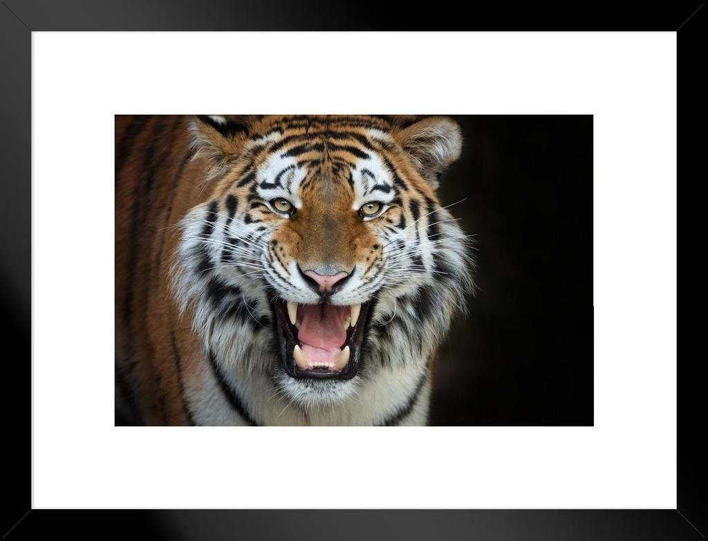 Siberian Tiger Up Close Photo Art Print Poster 24x36 inch