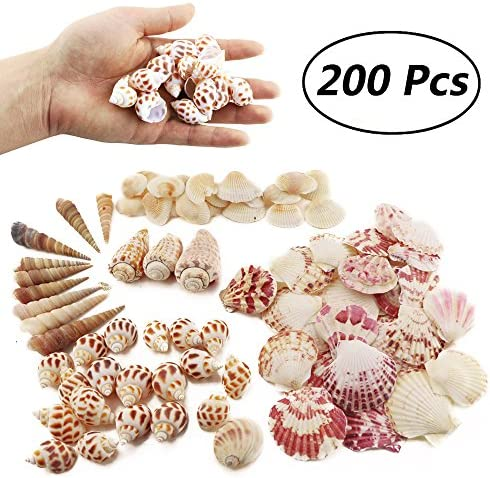 Weoxpr Seashells Various Natural Decorations product image