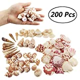 Weoxpr 200pcs Sea Shells Mixed Ocean Beach Seashells, Various Sizes Natural Seashells Starfish for Fish Tank, Home Decorations, Beach Theme Party, Candle Making, Wedding Decor, DIY Crafts, Fish Tan