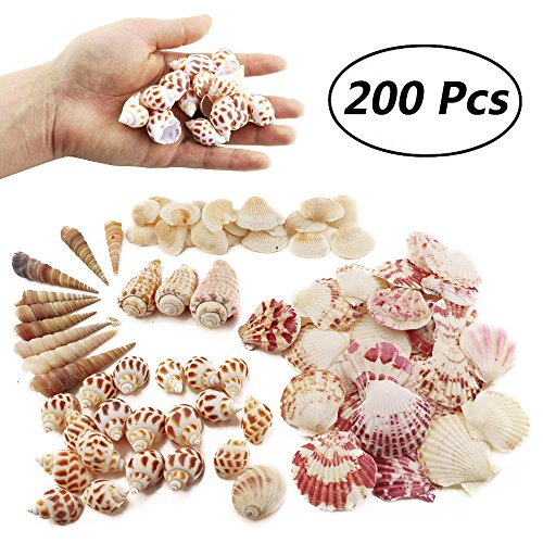 Weoxpr 200pcs Sea Shells Mixed Ocean Beach Seashells, Various Sizes Natural Seashells for Fish Tank, Home Decorations, Beach Theme Party, Candle Making, Wedding Decor, DIY Crafts, Fish Tan ()