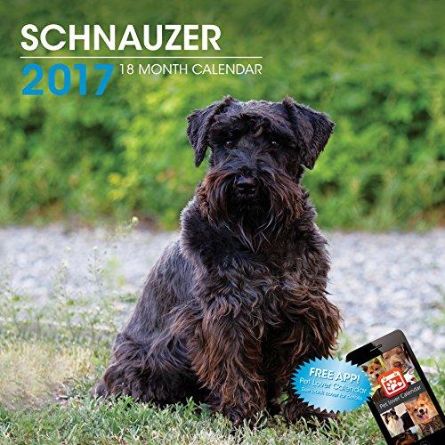 LittleGifts Schnauzer 2017 Calendar (3018)