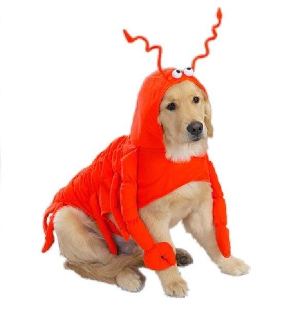 Lobster Costume For Dogs Dress Your Pooch Like Everyone'S Favorite Crustacean