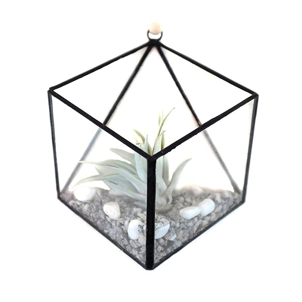 DIY Wall Planter, 3D Glass Geometric Wall Hanging Air Plant Terrarium Flower Succulent Vase Desk Planter Candle Holder, Modern Wall Mounted Art for Indoor Gardening Planting (Plants Not Included) by Wayber