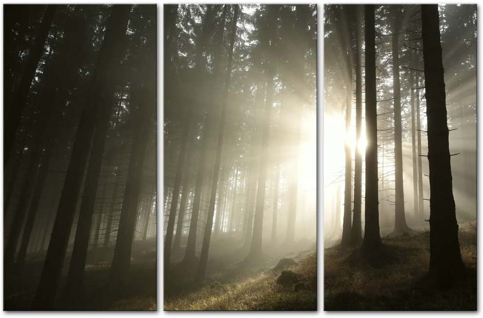 My Easy Art- Tree Wall Art Decor Rays of Sunrise Through The Wood Forest Canvas Pictures Artwork Nature Landscape 3 Panel Painting Prints for Home Living Dining Room Kitchen