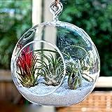 Efavormart 4 pcs 8″ Diameter Gigantic Globe Glass Terrarium/Decorative Clear Glass Globe