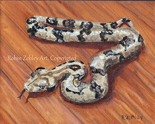 Snake Signed - Snake Art Print of original oil painting, Costa Rican Boa, signed by Artist Robin Zebley, 8
