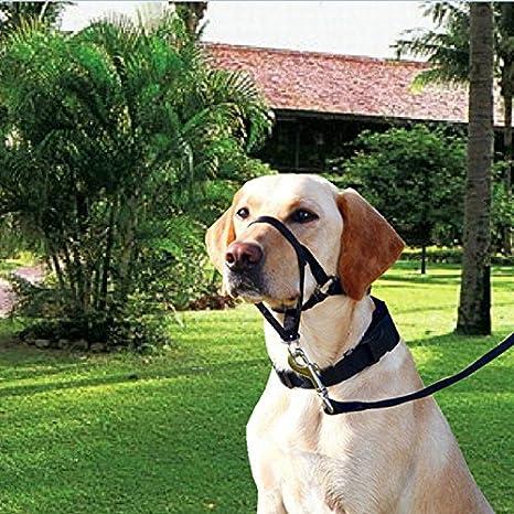 Homiki Correa Arnés para Adiestramiento de Perros Collar de Cabeza ...