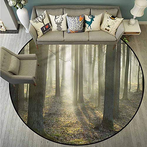 Living Room Round Mat,Forest,Foggy Oak Forest in Morning,Machine-Washable/Non-Slip,3'3