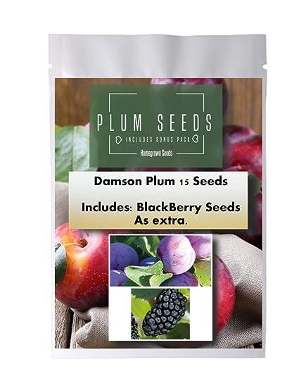 Amazon.com: Semillas de ciruela caseras, 15 semillas ...
