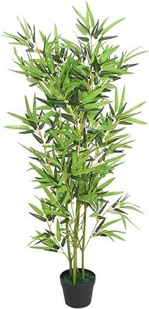 Plante des bambou