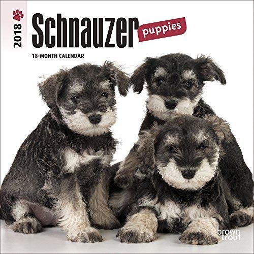 Schnauzer Puppies (Schnauzer Puppies 2018 7x7 Inch Monthly Mini Wall Calendar)