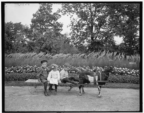 Photo: Goat team,children,animals,carts,wagons,Highland Park,Rochester,New York,NY,1900 by Infinite Photographs