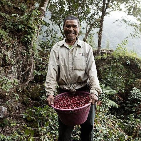 5lb-guatemala-la-libertad-reserva-unroasted-green-coffee-beans