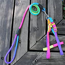 Calunce Adjustable Rainbow Colors Round Rope Belt Nylon Harness and Leash for Puppy Dog/Cat/Rabbits(L+L)