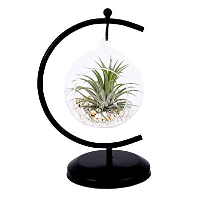 AUTOARK Glass Vase Plant Terrarium with Black Metal Stand,Ornament Display Stand,Office Desktop Potted Stand,Home & Office Decor Accent,1 Globe,APT-001: Garden & Outdoor